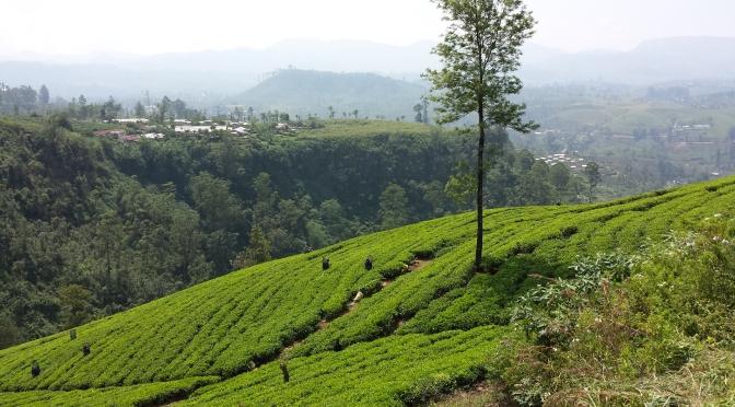 Scenic Sri Lanka – Nuwara Eliya